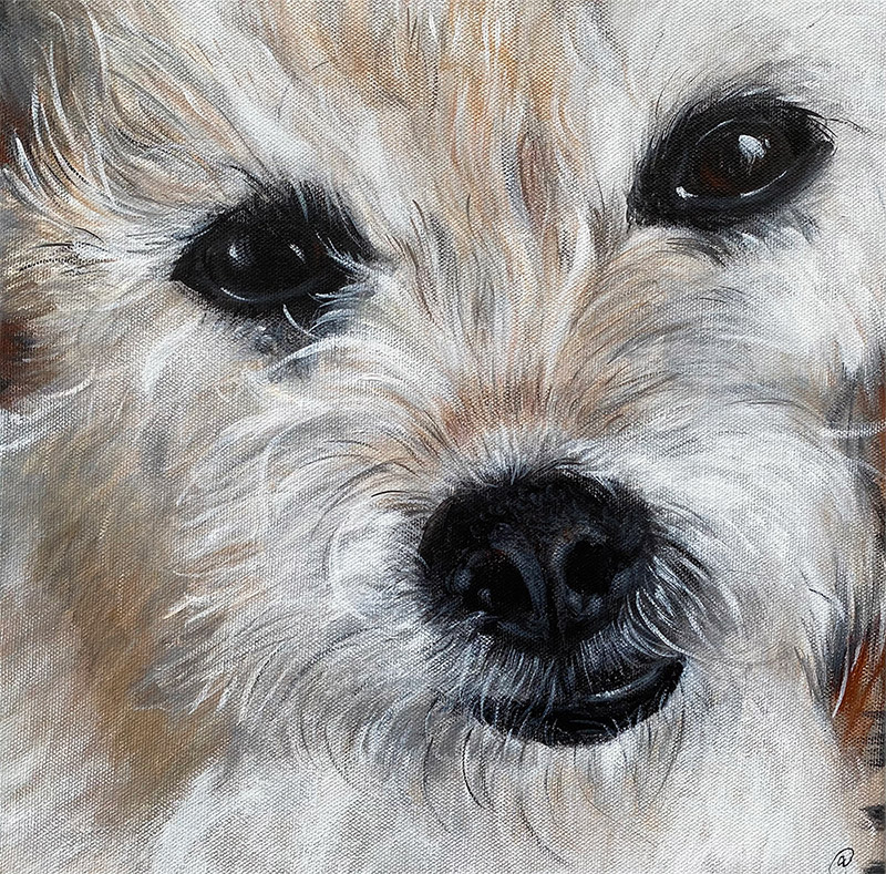 Closeup of face of small white dog with wiry fur, painted on canvas